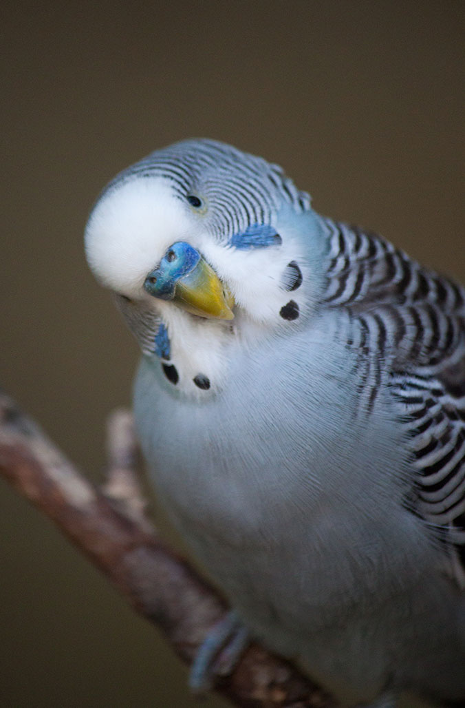 Parrot behavior - page